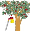 Gartenbaum ernten