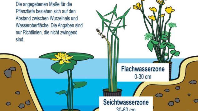 Teichpflanzenübersicht