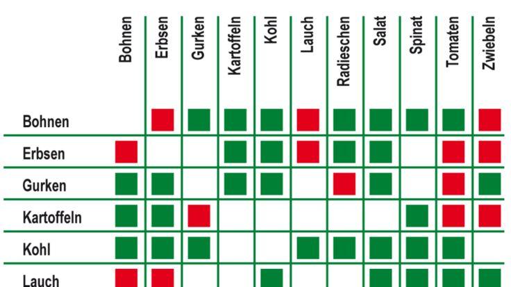 Pflanzennachbar-Tabelle