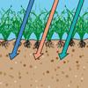 Vertikutierter Rasen erhält ausreichend Nährstoffe, Luft und Wasser