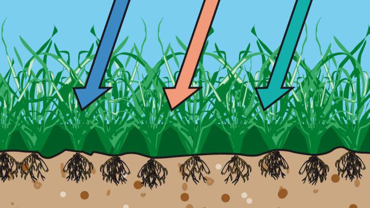 Verdichteter Rasenboden verhindert das Eindringen von Wasser, Nährstoffen und Luft